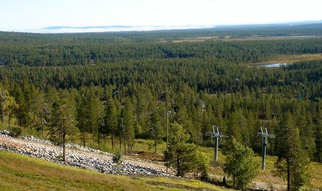 芬兰的深林:感受针叶林